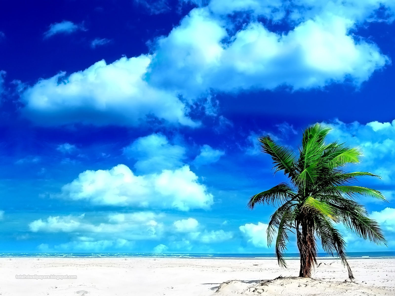 HD Wallpapers: palm tree wallpapers hd
