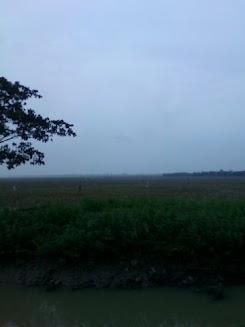 Tanah Murah Cocok Untuk Investasi dan Perumahan Subsidi di Cibitung Bekasi