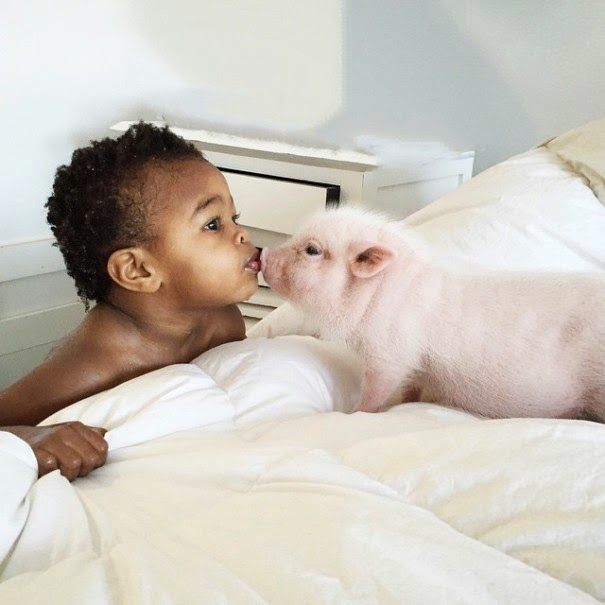 girl pet pig adorable friendship libby and pearl