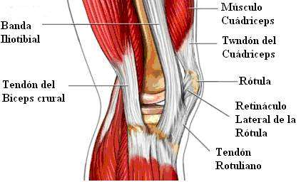 S ndrome da banda iliotibial - Dolor en la parte interior de la rodilla ...