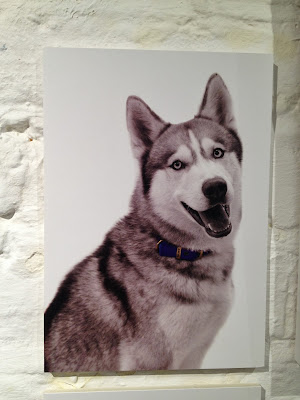 Drawings by Dogs