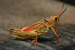 locust hindu personals Hindu single men in sabana seca stella mature dating site dandong milfs dating site junction city black girls personals el junquito dating site .
