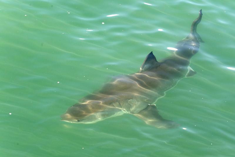 Mi blog sobre tiburones