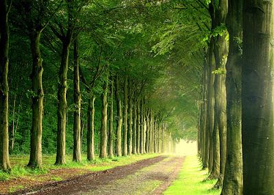 con đường, bóng cây