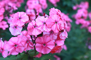 тула, центральный парк, белочки в туле, парк белоусова в туле, цветы, клумбы, белочки, флоксы