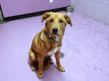 A19846564/1576-FINCH-M-GOLDEN RETRIEVER-1 AN-DIGESTION