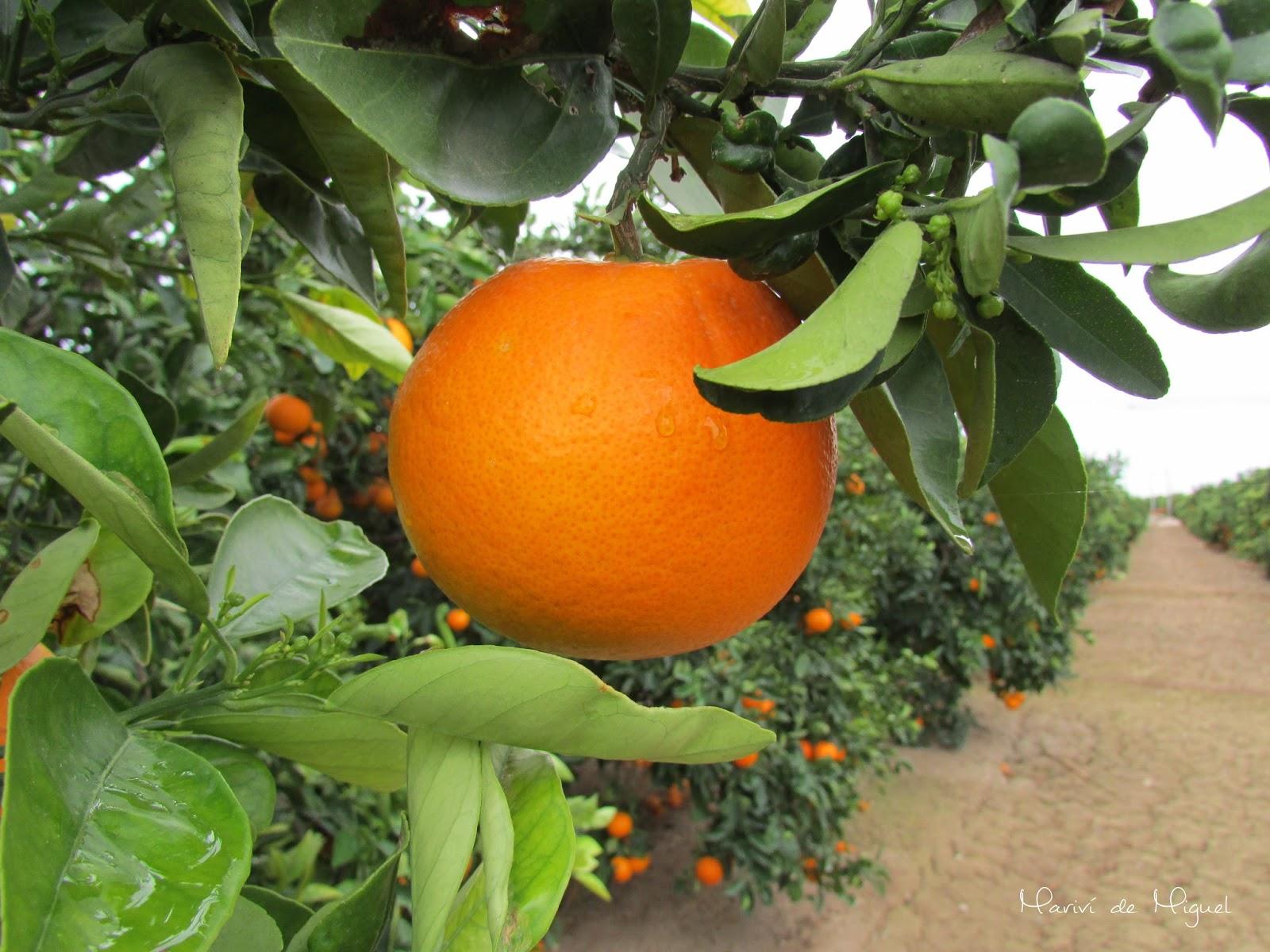 Otoño - Naranjas