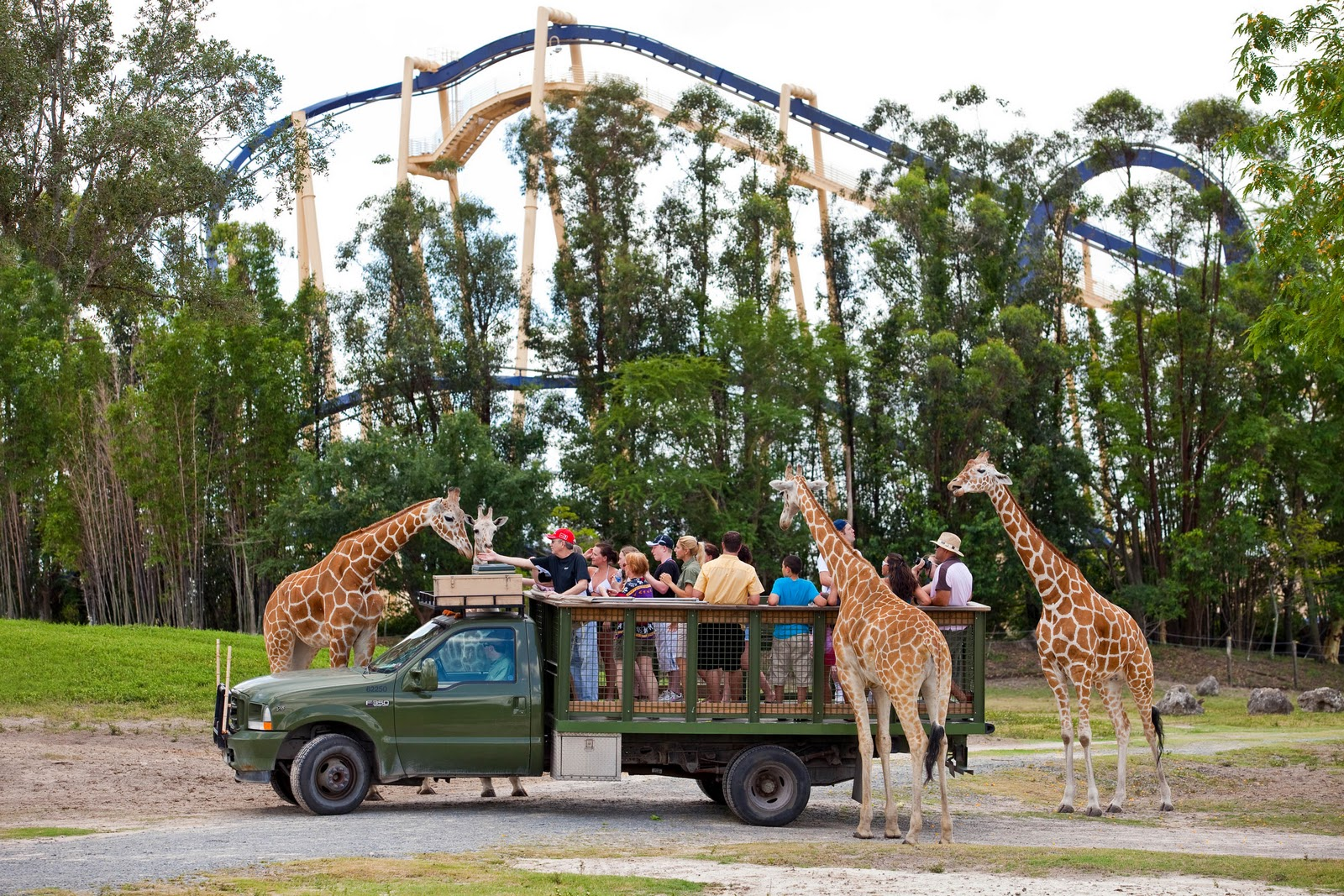 TPA Quick Take New Busch Gardens Offer Invites Florida Residents