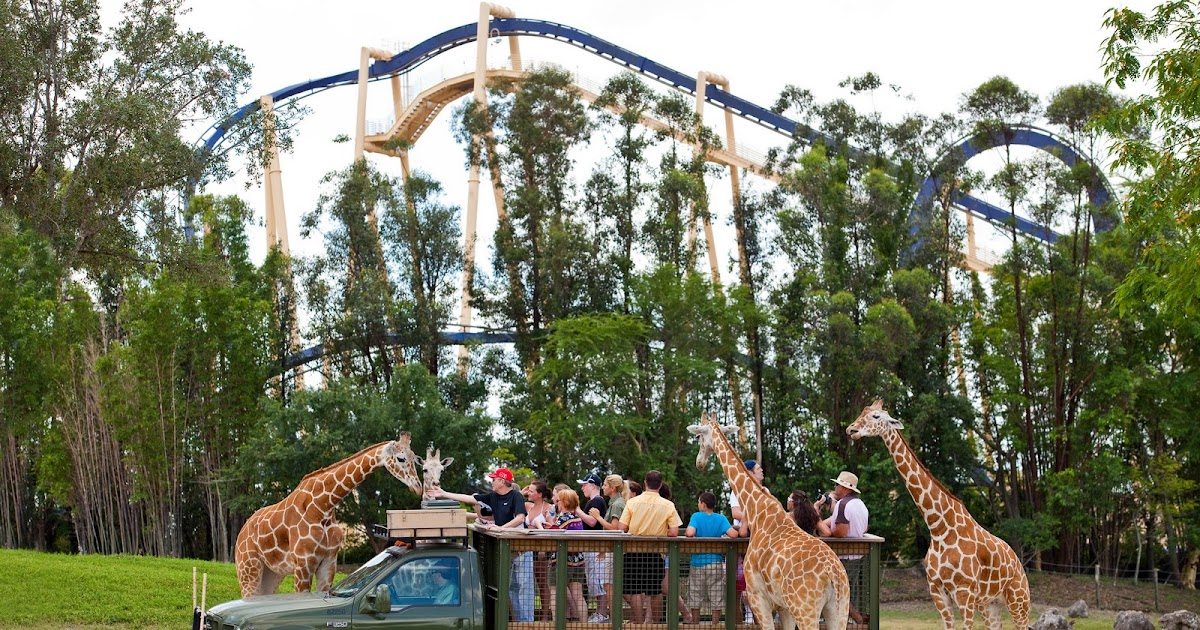 Tpa Quick Take New Busch Gardens Offer Invites Florida Residents To Experience Free Serengeti