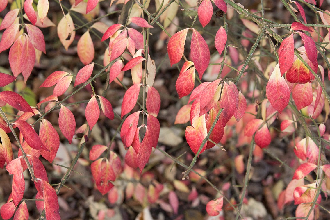 red leaves on a bush