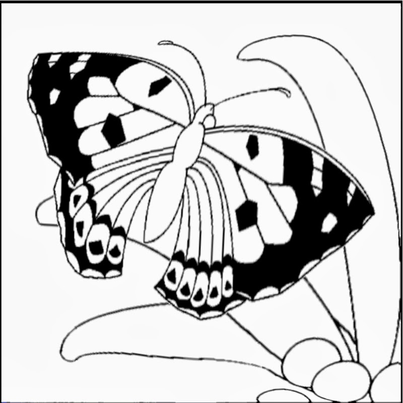 Coloring: Kamehameha Butterfly, State Insect of Hawaii title=