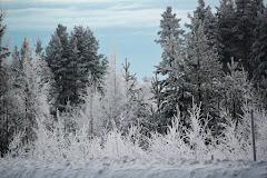 Vinter i Norrland