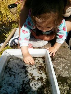 exploring a pond