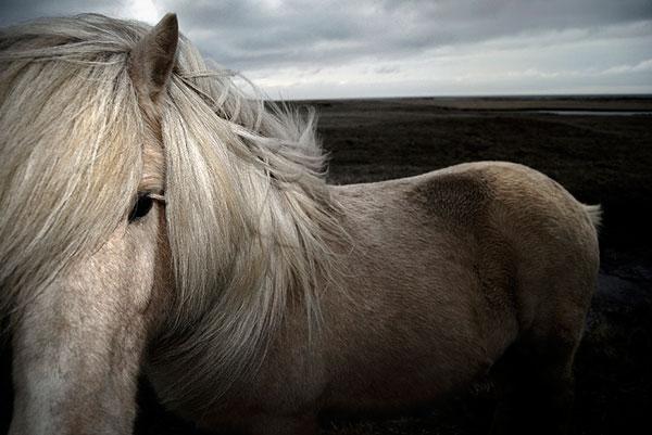 Akos Major - Horse