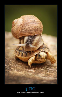 caracol y tortuga temerarios