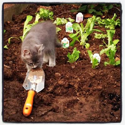 Cats In Gardens The Trowel Hunter