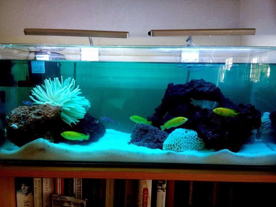 Setting up your first saltwater tank fishing kims for Setting up a fish tank