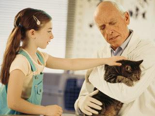 Tips merawat kucing peliharaan