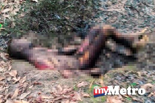 Punca Sebenar Lelaki Ditemui Mati Terbakar