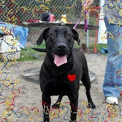 ADOPTED!!!2/28/11 END OF ROAD FOR HER THIS WEEK!