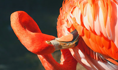 The Ethernal Dance of the Flamingo