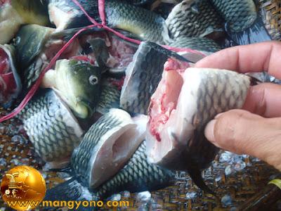 5 Ekor ikan mas, dipotong dan dibersihkan.