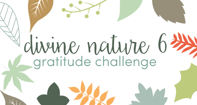 Divine Nature 6 Gratitude Challenge