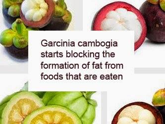 weight loss garcinia cambogia