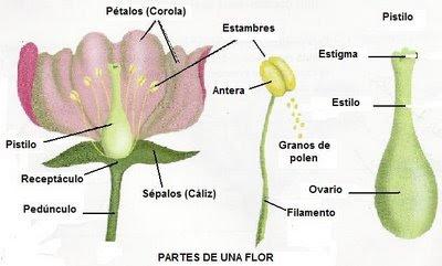 5 Ejemplos De Reproduccion Sexual De Las Plantas