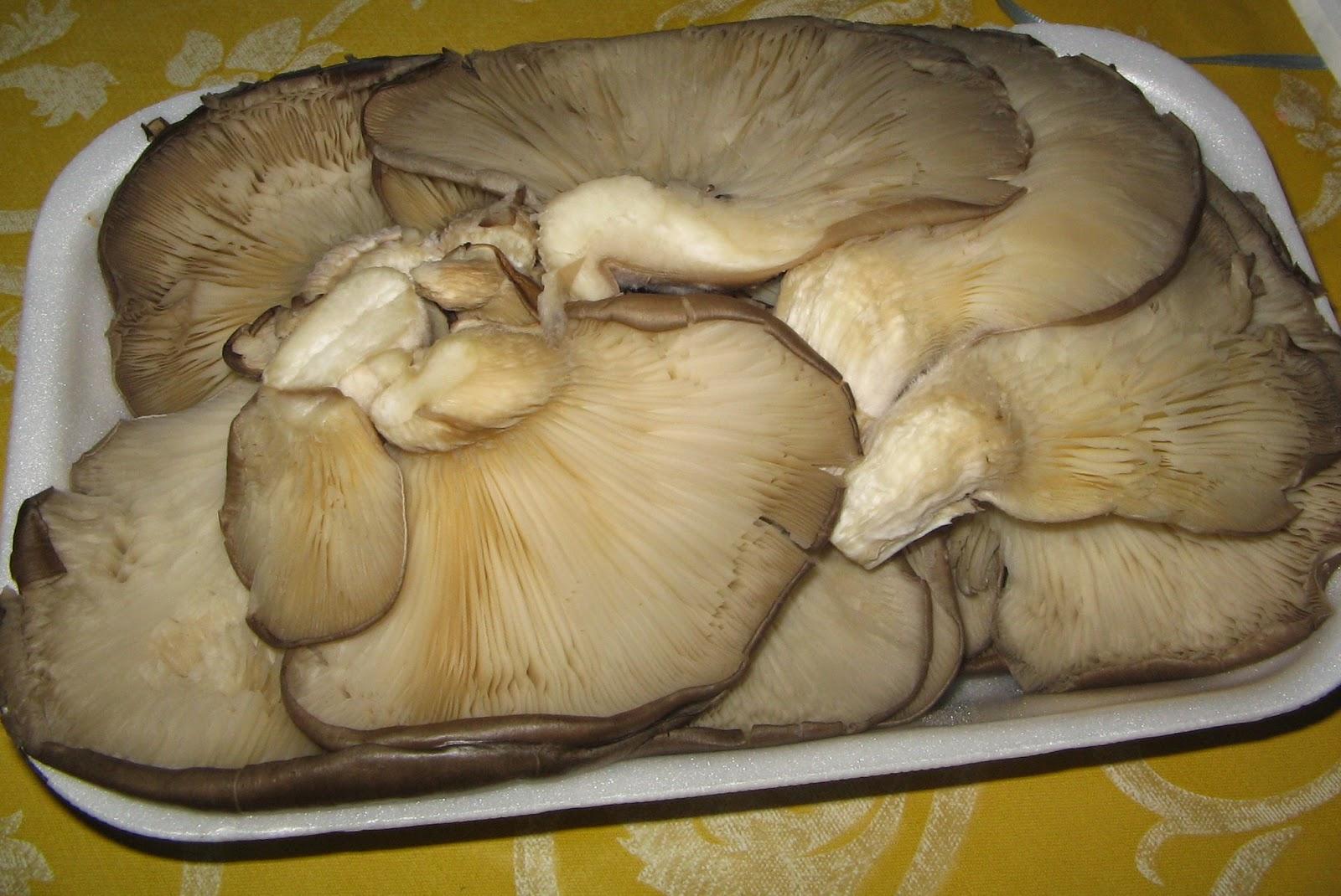 Non solo cucine isolane funghi pleurotus al forno for Cucinare funghi