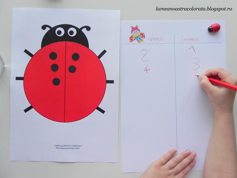 Aflăm numerele para şi impare cu metoda Montessori si o planşă cu buburuză