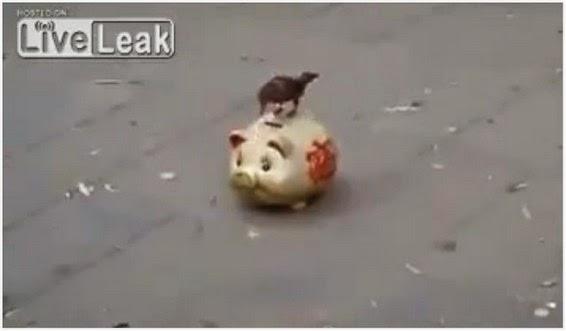 Video Burung Jadi Pengemis Untuk Mintak Duit