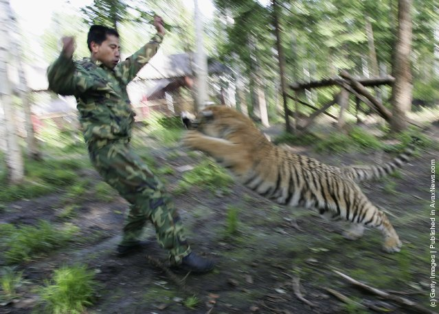 Image Result For Baby White Tigers Imagesa