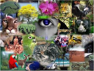 reino animal y vegetal, autotrofos y heterótrofos, biodiversidad