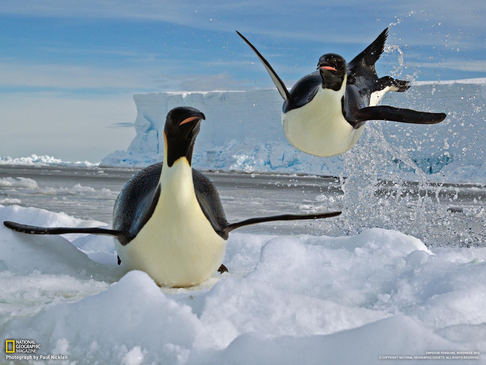 ice pinguin