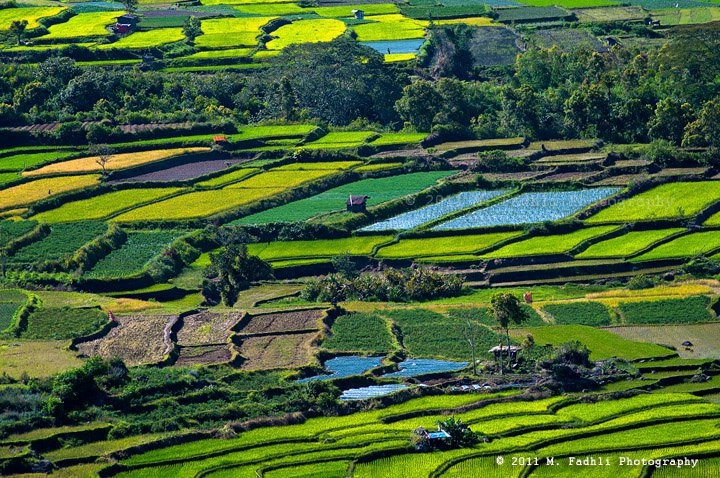 Pertanian Indonesia Cerita Cerita Chacha