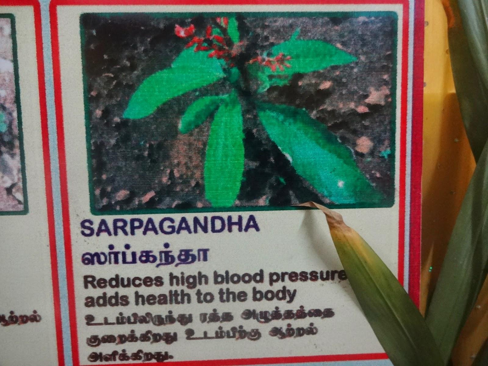 himalaya drug company essay