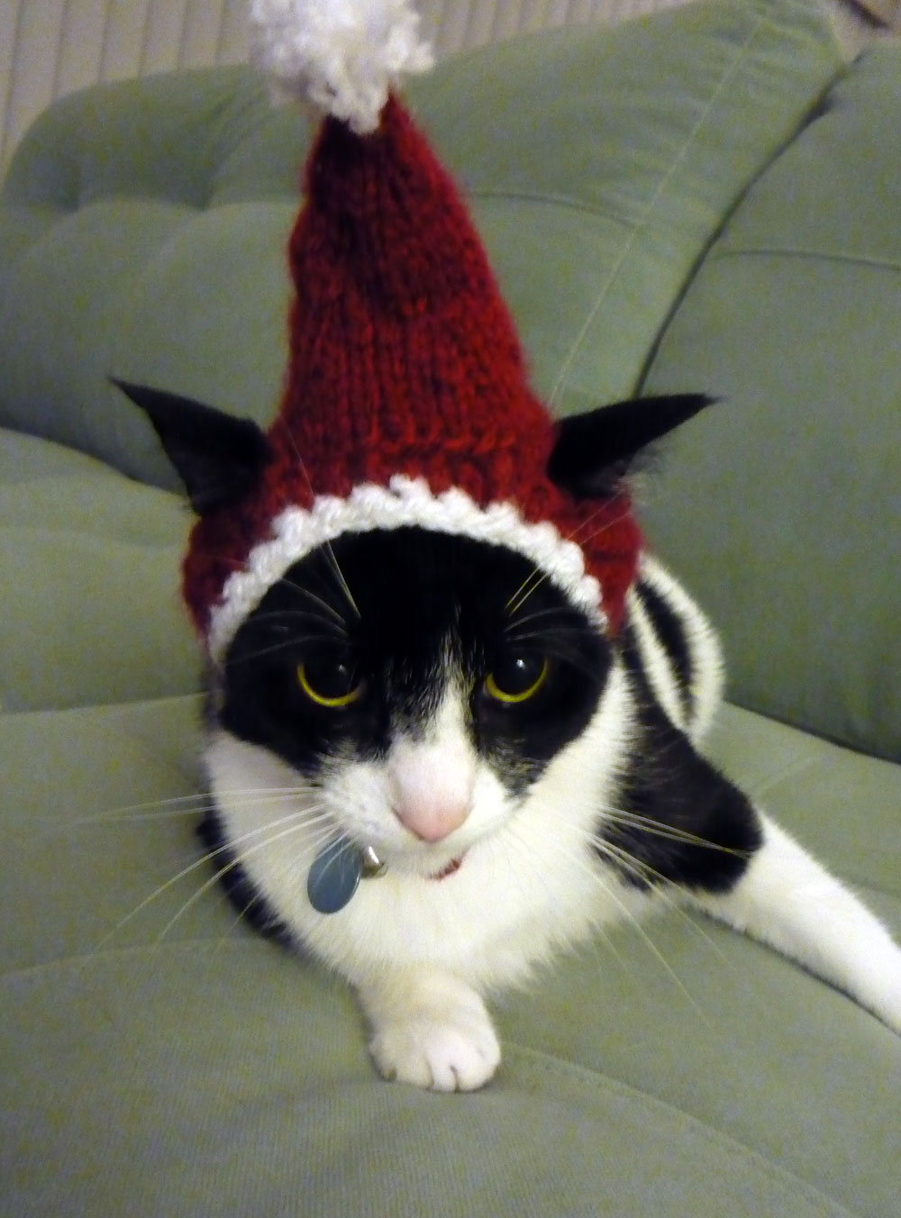 Your Daily Cute Two Cats Tuesday Our Silly Cat Christmas Hat
