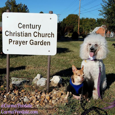 Carma Poodale and Scooby Doo at the Century Christian prayer garden