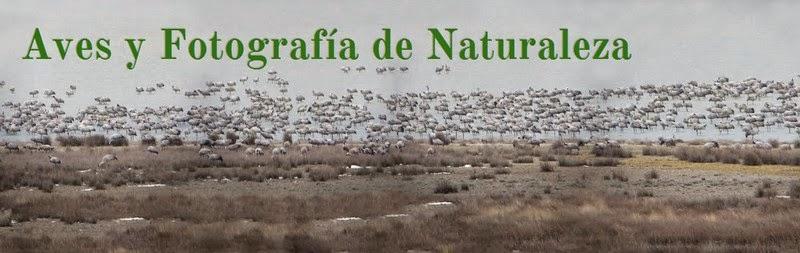 http://delfingofe.blogspot.com.es/