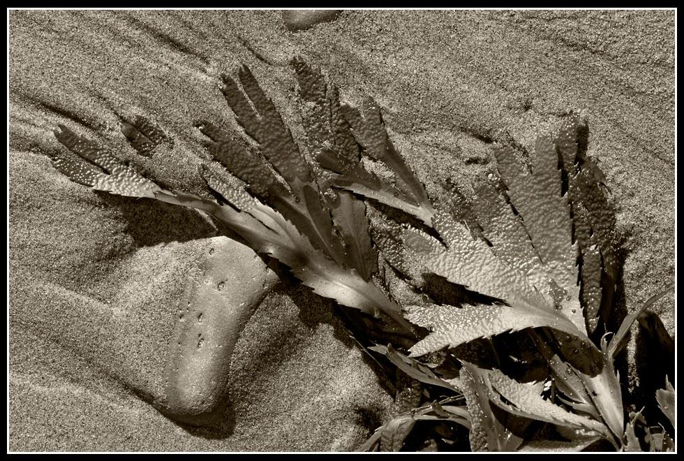 Nova Scotia; Hirtle's Beach; Rocks; Seaweed; Atlantic Ocean