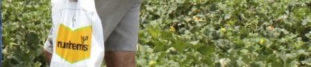 Lancement de deux variétés du Melon de nunhems au Maroc