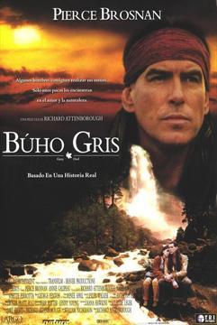 Buho Gris en Español Latino