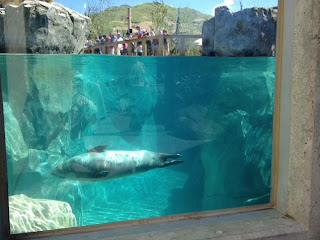 Hogle Zoo rocky Shores exhibit Utah