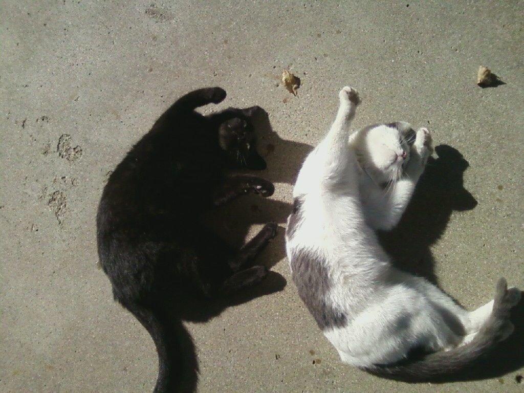 Синхронные коты фото 1