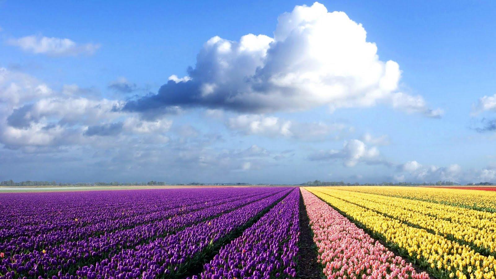 http://4.bp.blogspot.com/-i9-N0Xb0znc/TipsgjTaTKI/AAAAAAAAAHs/QidmQMbNXNg/s1600/%255Bwallcoo_com%255D_colorful+flower+field.jpg