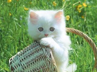 Kenapa Kucing Menoleh Saat Dipanggil PUS?