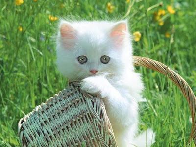 23 Keunikan Tentang Kucing [ www.BlogApaAja.com ]