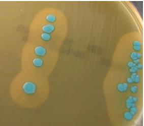 Food Microbiologee: August 2012
