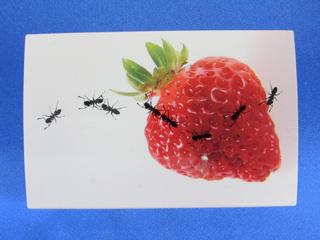 名刺ケースに印刷(蟻と苺)